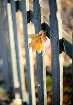 af9700c0ac921d84bfc27f3b5c7bac21--wood-fences-picket-fences